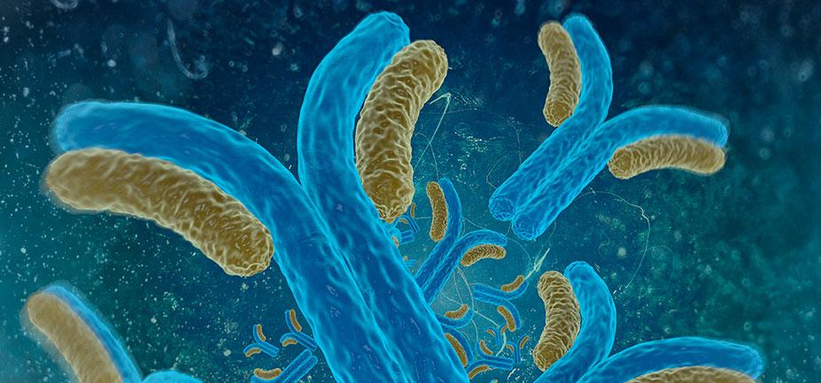 anticorpos-monoclonais-1
